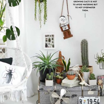 6 Insta- Worthy Indoor Plants to Freshen Up Your Home
