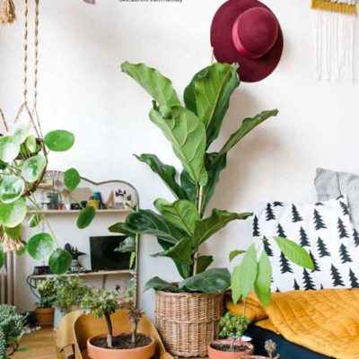 Urban Jungle, Living and Styling With Plants