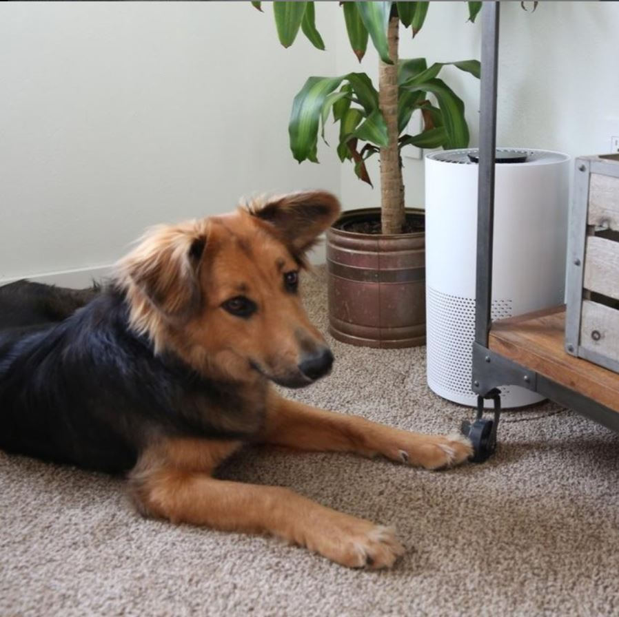 Breathe Clean Air With the Help of Air Purifiers - MarilenStyles.com